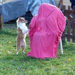 Aux chiots, on apprend à rejoindre son maître, même s'il a des tenues bizarres...