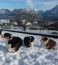 Cours chiots