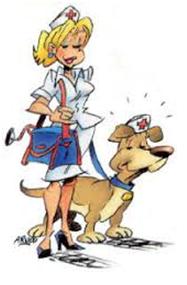Education canine, Ecole du chiot, Agility, Sauvetage | A